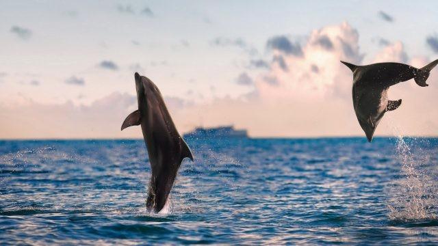 Два дельфина резвятся в море
