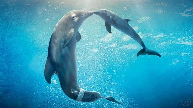 Мама-дельфин целует своего детёныша