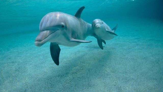 Мама-дельфин вывела своего детёныша на прогулку