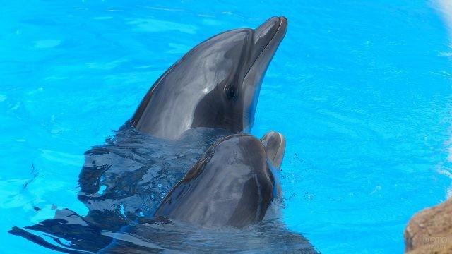 Мама-дельфин выводит детёныша на прогулку