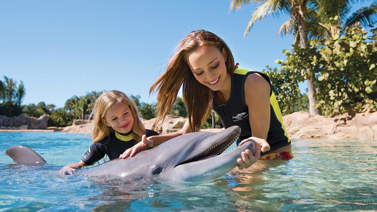 Отдыхающие гладят дельфина