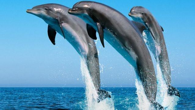 Семейство дельфинов синхронно выпрыгивают из воды