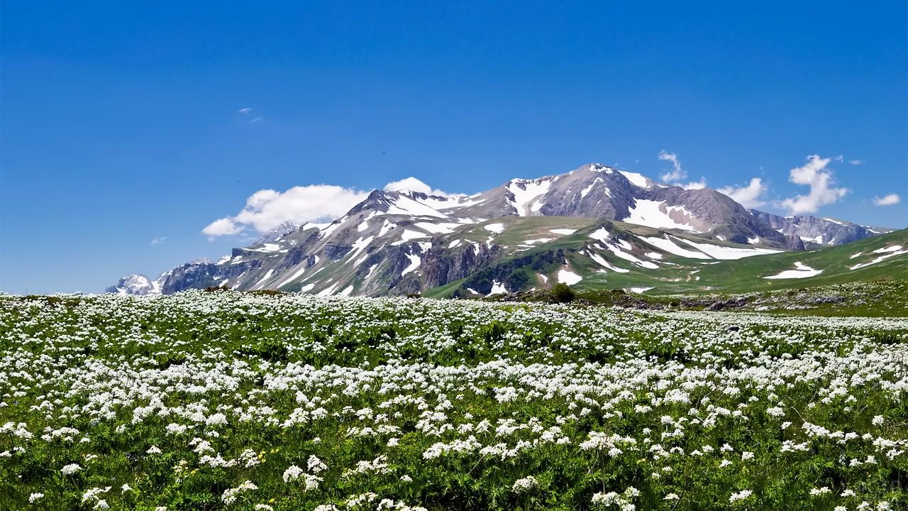 Альпийские луга на Кавказе