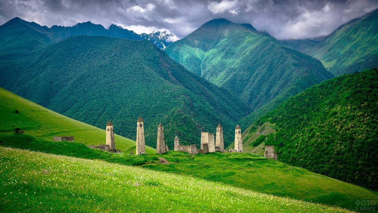 Вовнушки в кавказской природе
