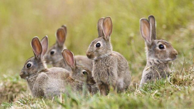 Семейство зайчат на поляне