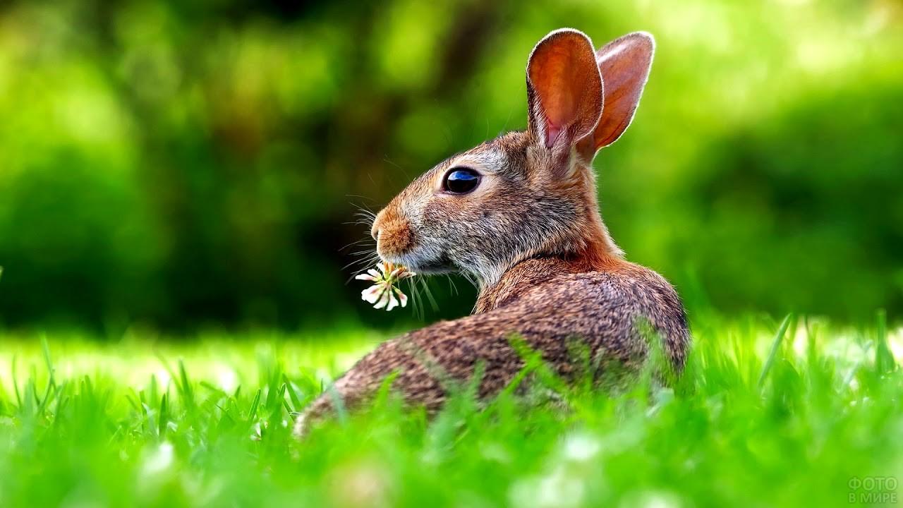 Заяц держит во рту цветок