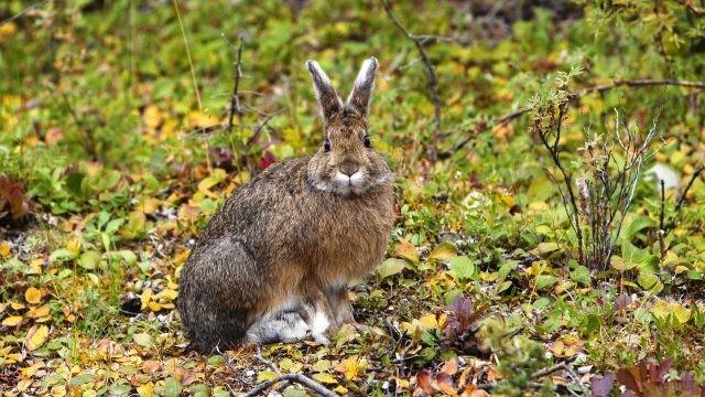 Заяц в осеннем лесу