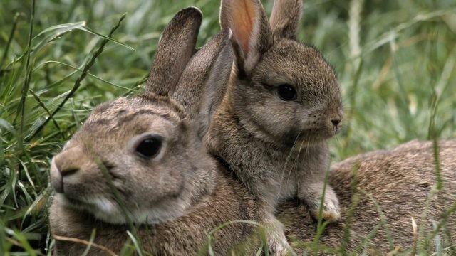 Зайчиха с зайчонком в лесу