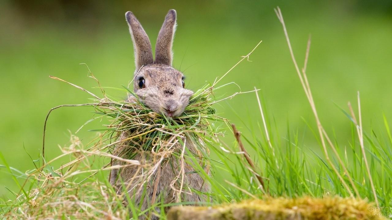 Зайчик кушает траву