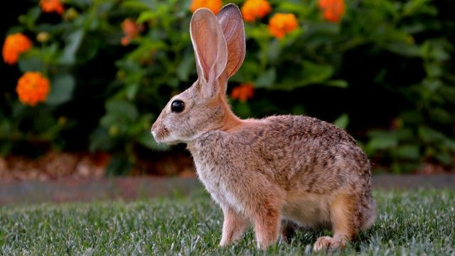 Зайчонок на лужайке