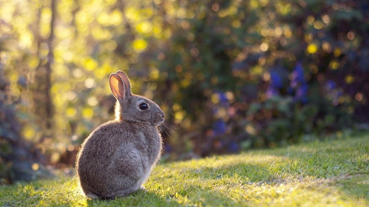 Зайчонок сидит на опушке
