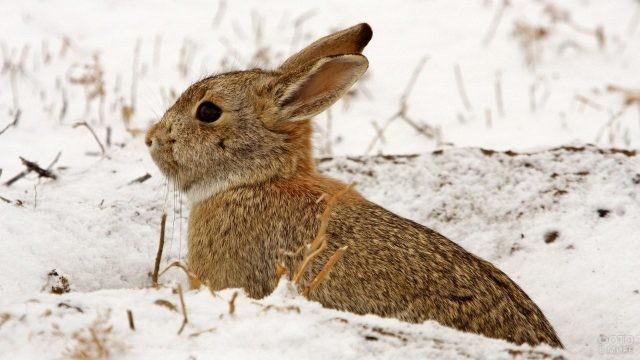 Зайчонок смотрит вдаль
