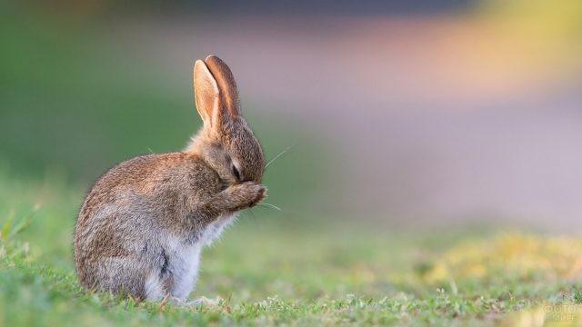 Зайчонок спрятал свой носик