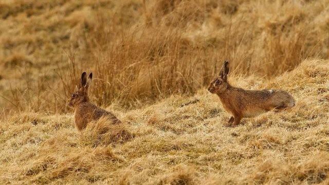 Зайцы осенью вышли в поле