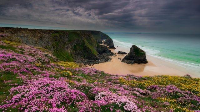 Цветы на скалах Корнуэлла