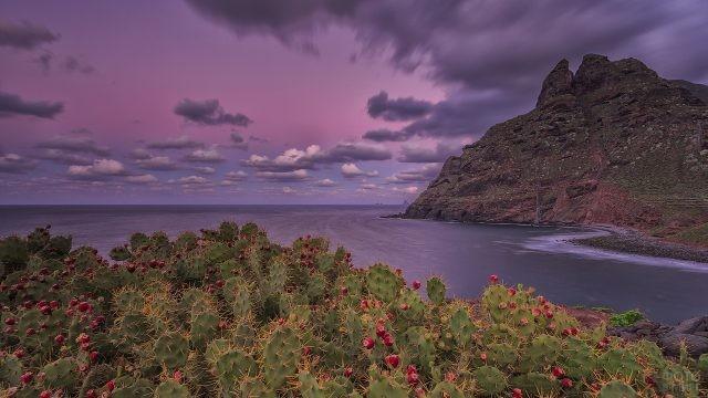 Кактусы на фоне океана