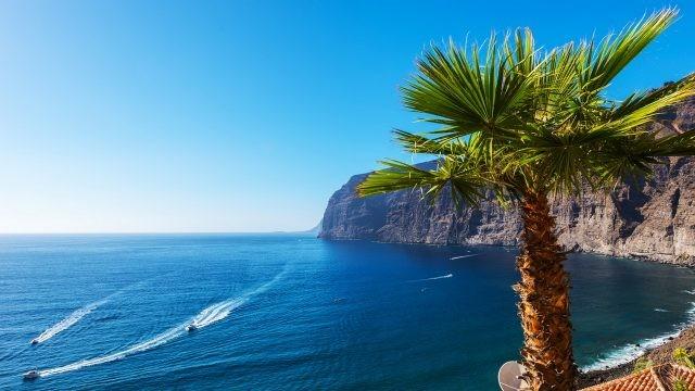Пальма на Канарских берегах