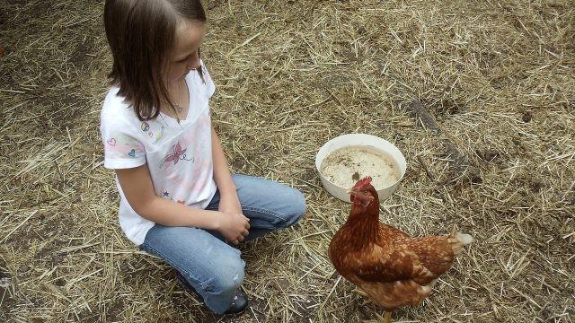 Девочка и курица смотрят друг на друга