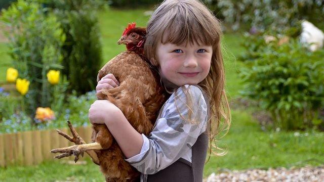 Девочка прижимает к себе курочку