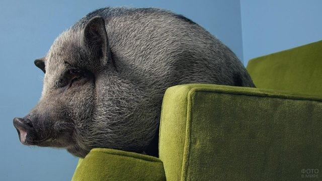 Боров развалился на диване
