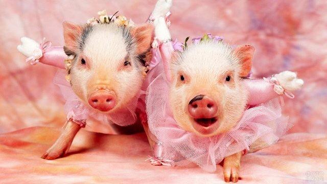 Две свинки-балерины в студии
