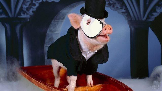 Свинка в костюме из мюзикла Призрак оперы