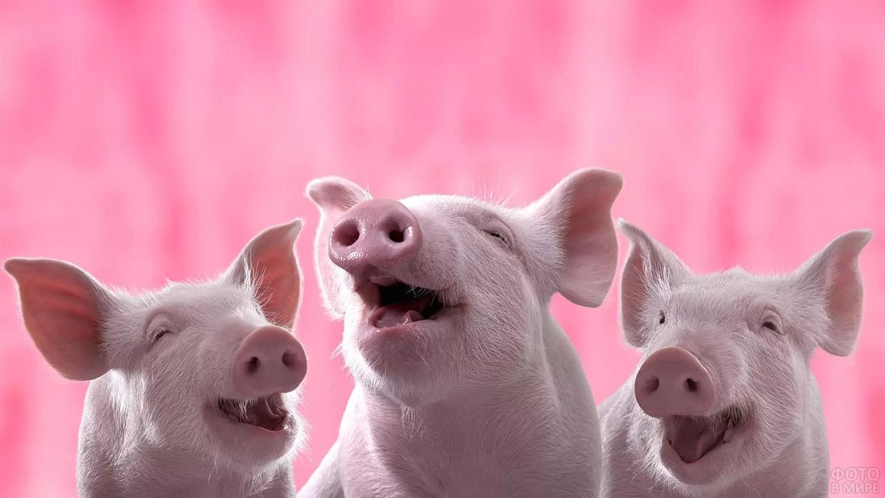 Три смеющихся поросёнка на розовом фоне