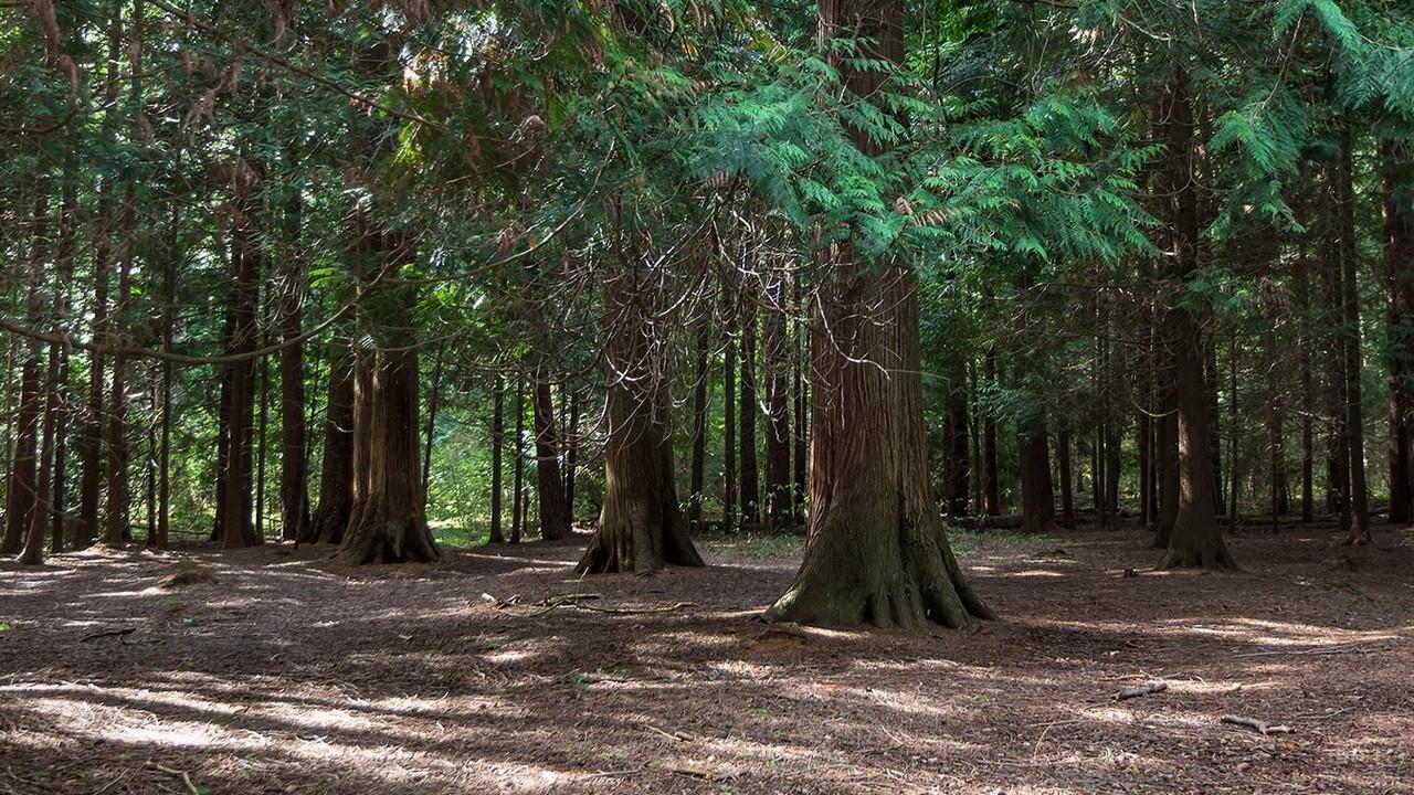 Деревья в лесничестве Гренц