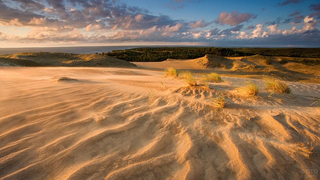 Кустики травы в дюнах