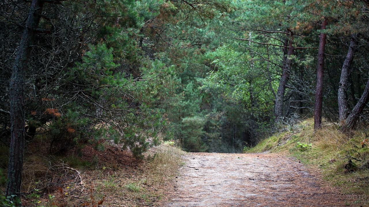 Лесная дорога в Королевском бору