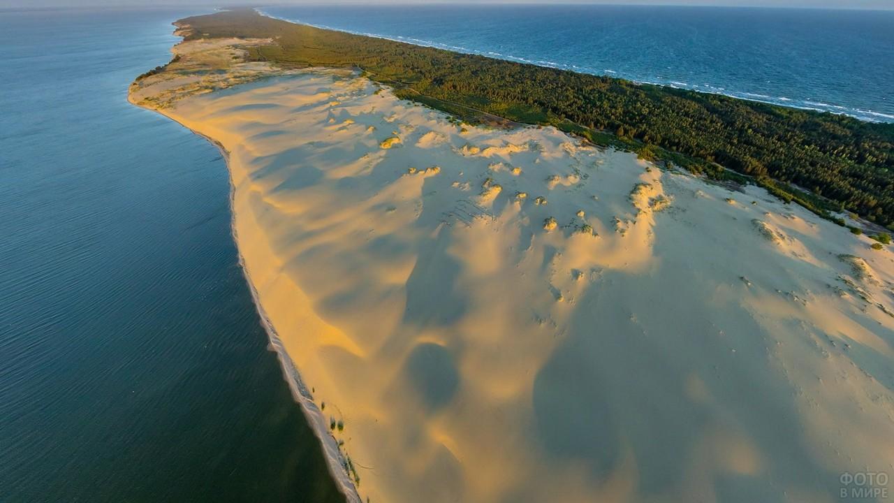 Песчаный берег Куршской косы