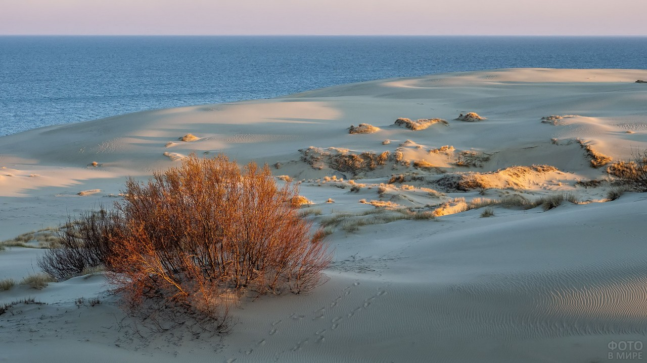 Следы птиц на песке у моря