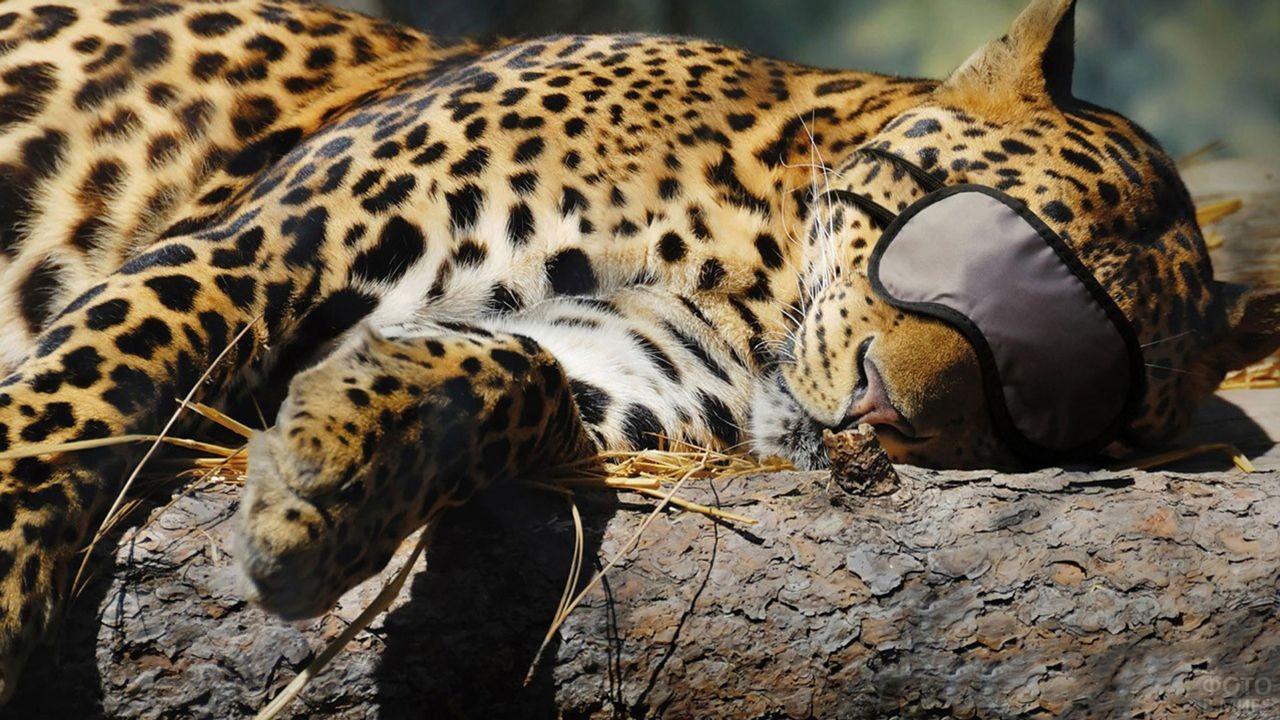 У леопарда на глазах повязка для сна