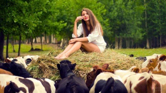 Девушка на стоге сена рядом с коровами