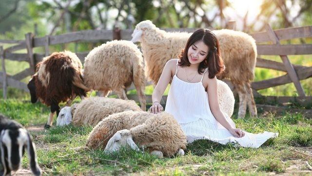 Девушка в белом платье гладит овечку