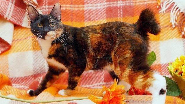 Домашняя кошка на клетчатом пледе