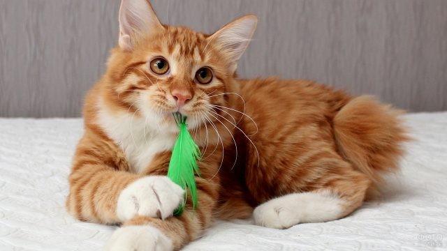Кошка ест зелёное перышко