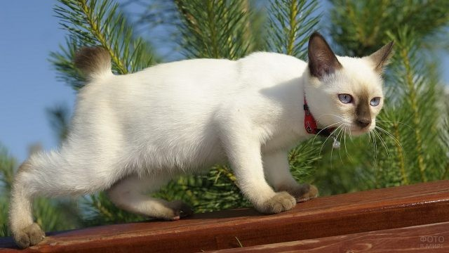 Кот крадётся по забору