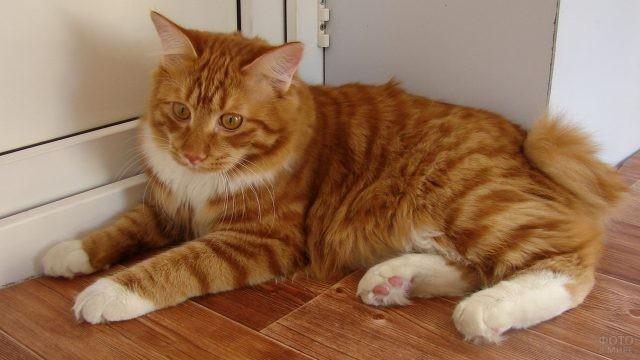 Кот с рыжими глазами возле балконной двери