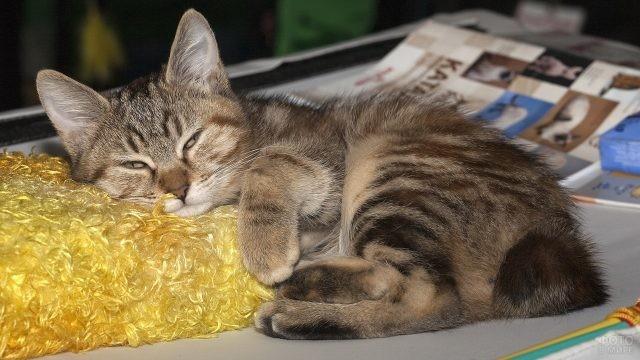 Котёнок спит на жёлтой подушке