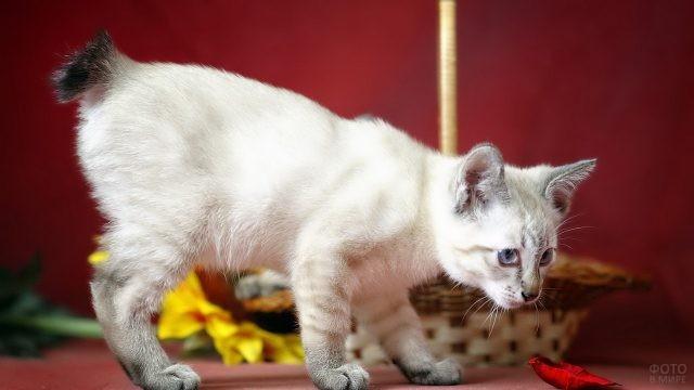 Котёнок возле подсолнуха