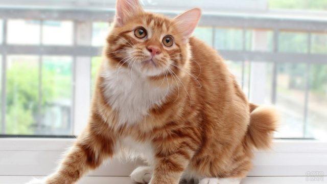 Красивая кошка на подоконнике