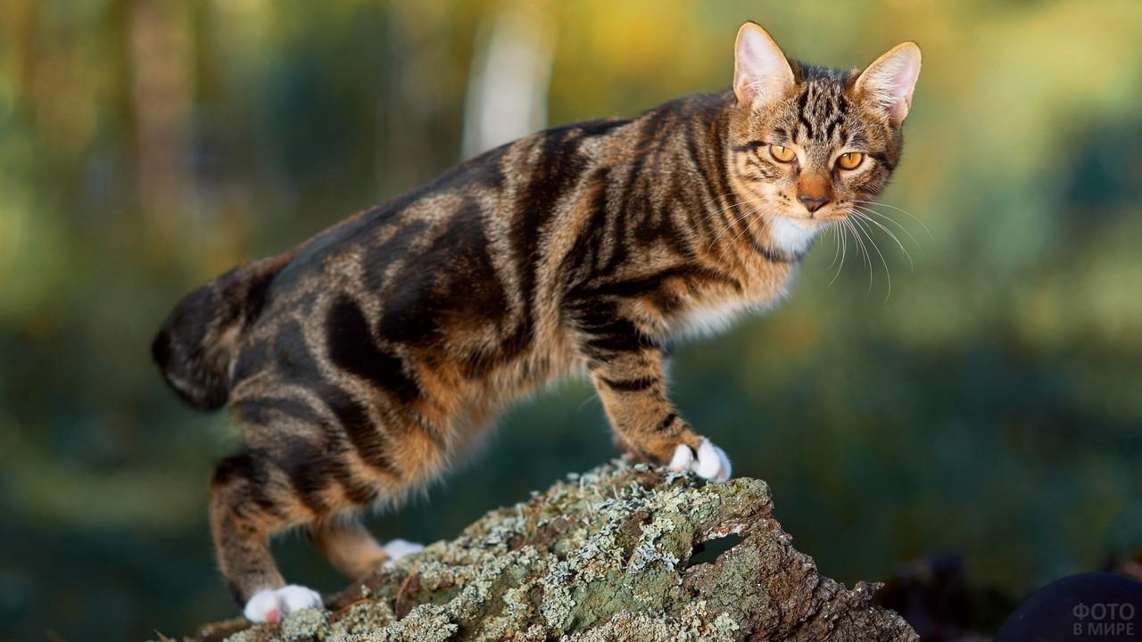 Красивый кот стоит на дереве