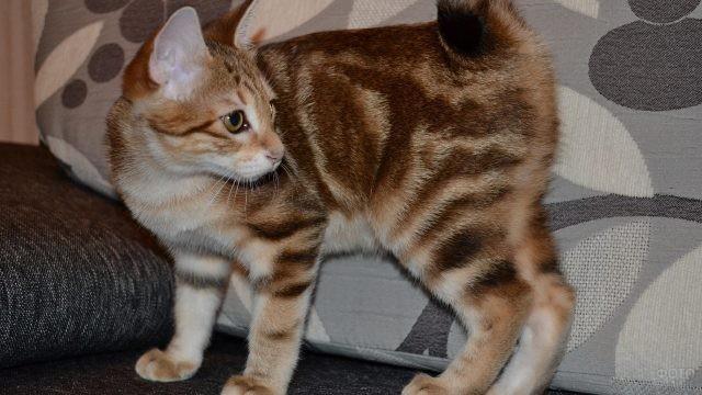Молодая кошка смотрит в сторону на диване