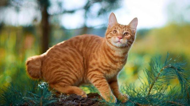 Рыжая кошка на природе