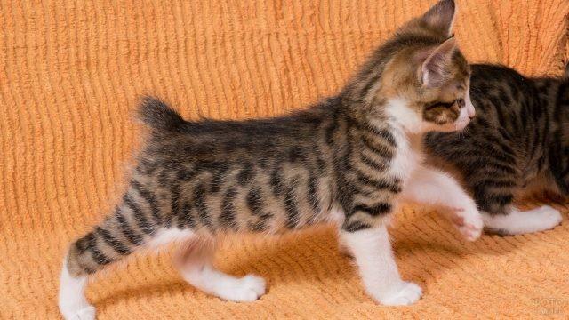 Стойка котёнка на оранжевом диване