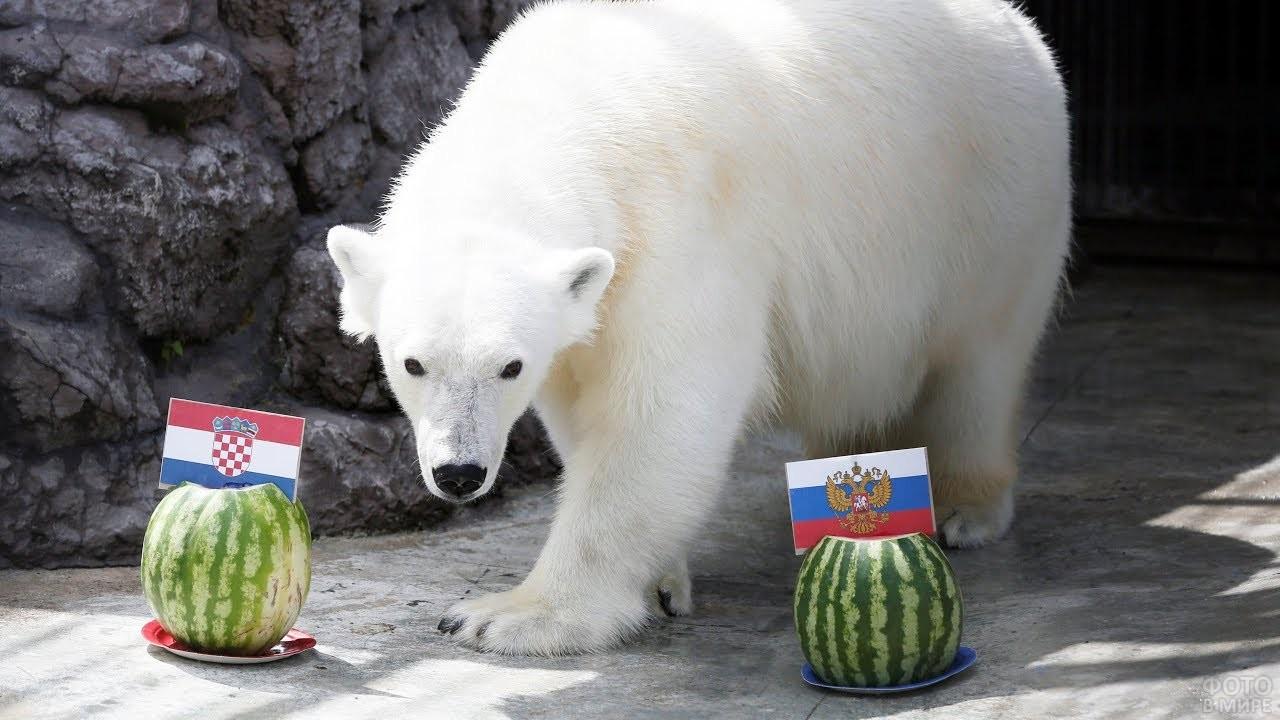 Медведь стоит между двумя арбузами