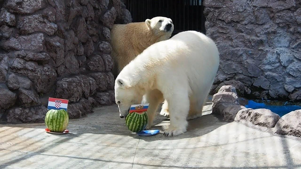 Медведица предсказывает победу сборной России