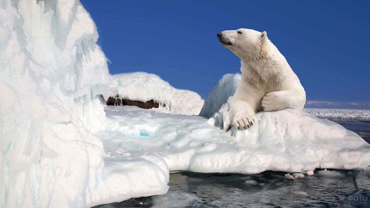 Нанук смотрит на ледяную гору