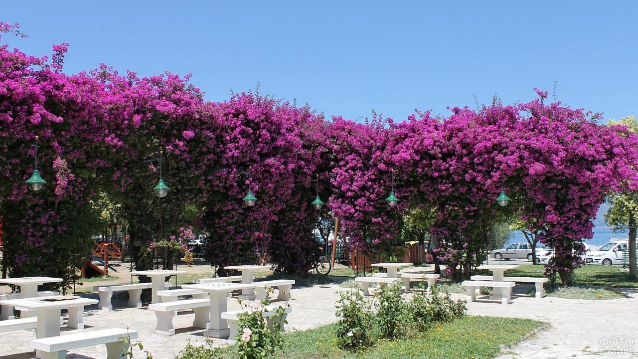 Цветущие деревья на острове Корфу